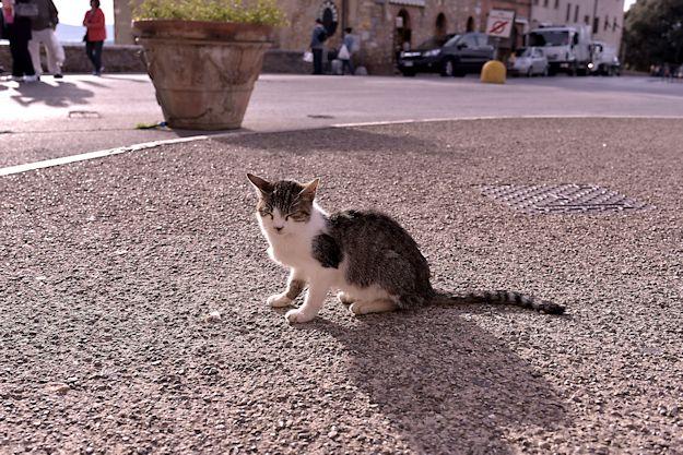 サンジミニャーノの猫